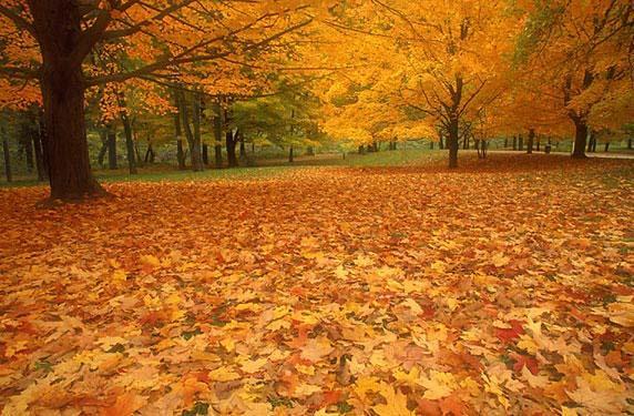 Осень чудесная осень