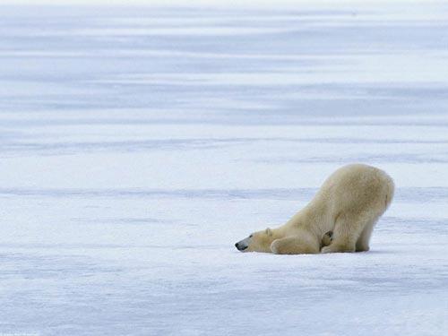 ...знать где взять интересную фотку белого медведя, если понадобится.