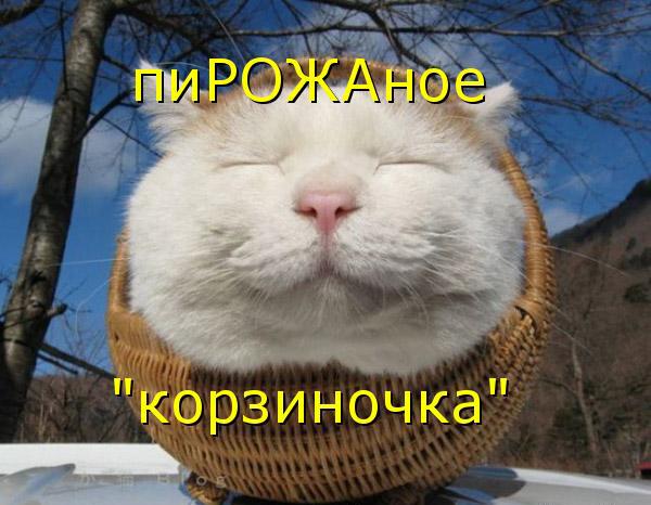 http://bm.img.com.ua/img/prikol/images/large/4/6/183964.jpg