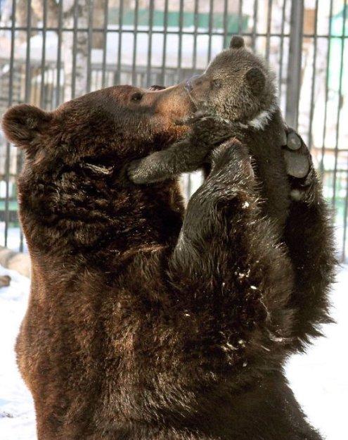 Любви все существа покорны.