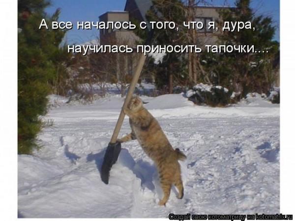 Фото приколы про котов: