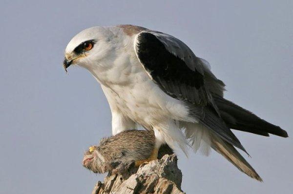 17:55.  Категория.  Классные фотографии птиц (29 фото)