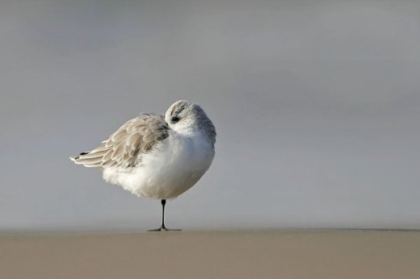 Красивые фотографии птиц (47 фото).