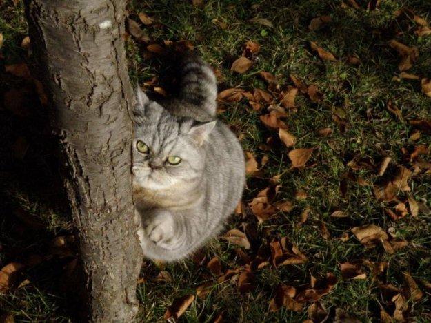 Новая звезда интернета - толстая кошка Джули (19 фото)
