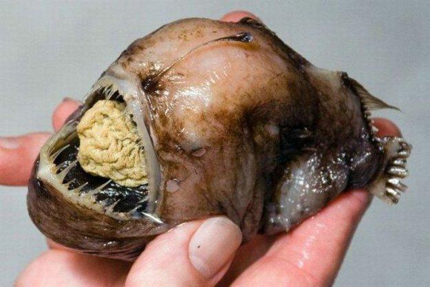 Рыбы монстры