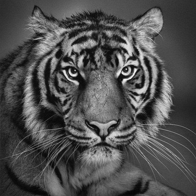 Животные теги животные фотографии
