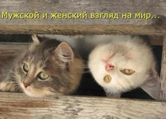 http://bm.img.com.ua/img/prikol/images/large/5/4/178445_371930.jpg