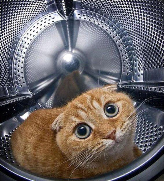 Прикольные картинки кошек с надписью