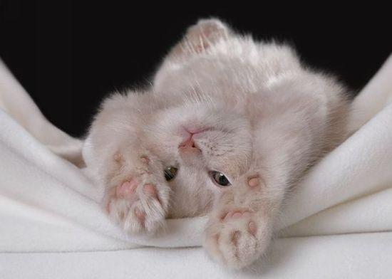 Категория записи:Свободные темы.  Теги. красивые фотографии. котята.
