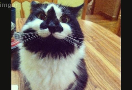Кошка улыбака заткнула за пояс