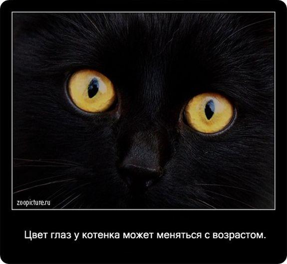 О котах