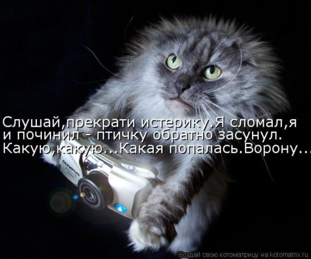Котоматриця!)))) - Страница 10 226676_517629