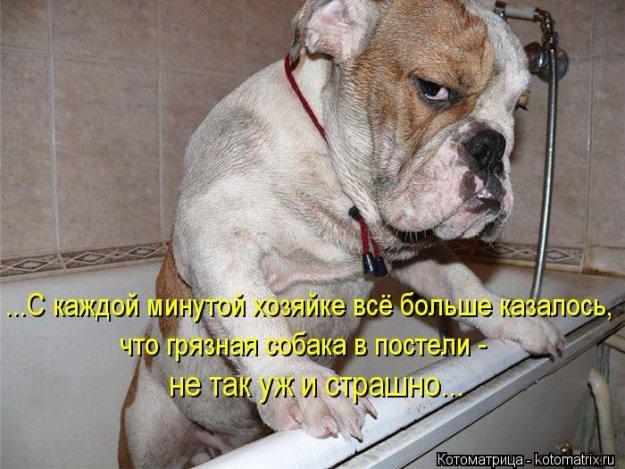 Котоматриця!)))) - Страница 10 226676_517641