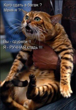 """Выпуск  """"AddFun.ru - интересный уголок рунета: обновление за 04-05-2009 """"..."""