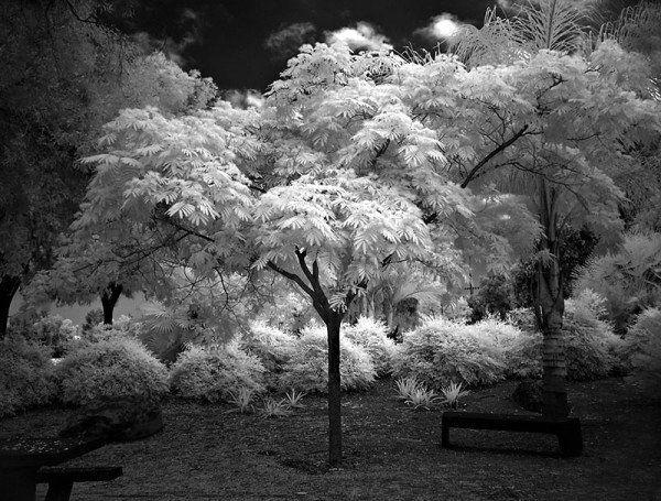 Деревья, озеро, рассвет, черно-белое, монохром обои, картинки, скачать, деревья, озеро, рассвет, черно-белое