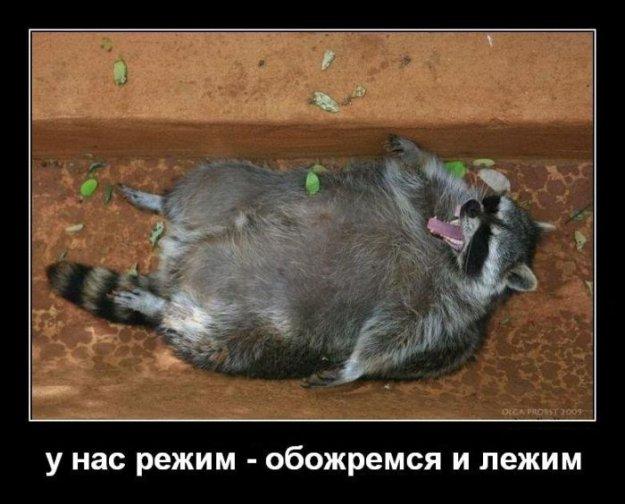 Веселые картинки :) - Страница 4 221196_502432