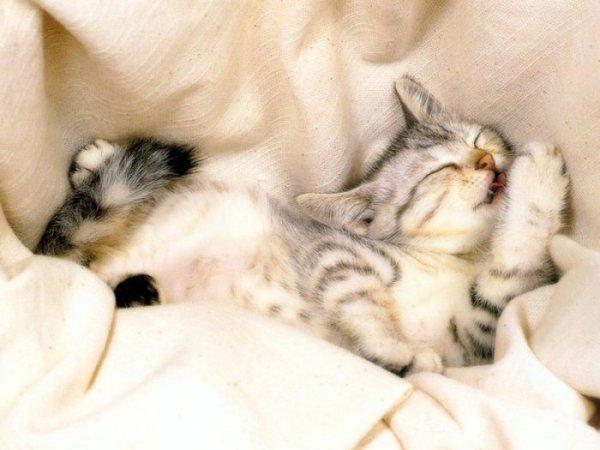 Очень красивые фото кошек