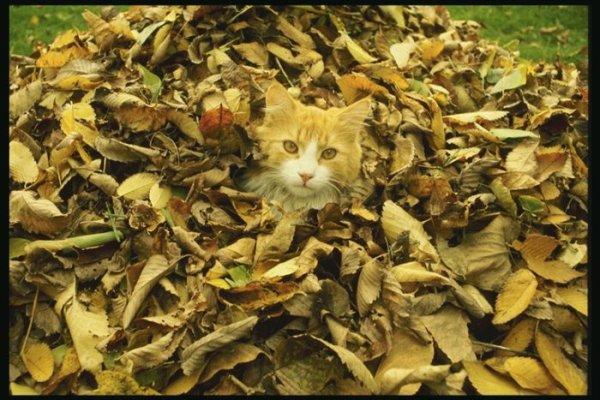 и стригущий лишай у кошек фото на сайте о природе и животных.