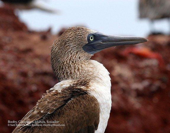Что ведет птиц на юг.  Раскрыт секрет биологического компаса.