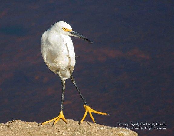 Животный мир :: Птицы Южной Америки.