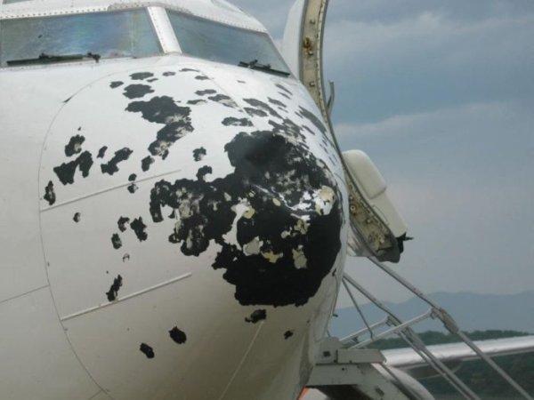 rep-ua.com НОВОСТИ Птицы едва не съели самолет.  (ФОТО)