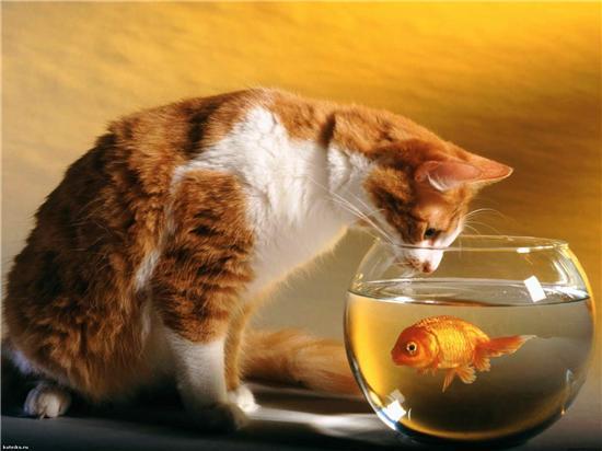 Картинки рыжей кошки