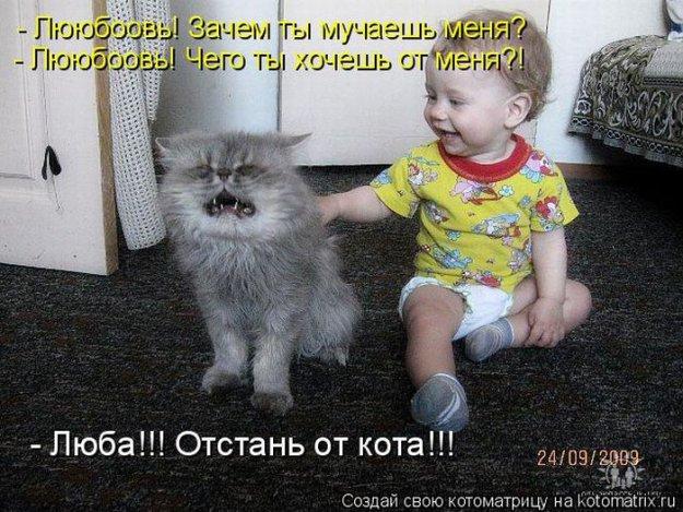 Веселые котоматрицы)