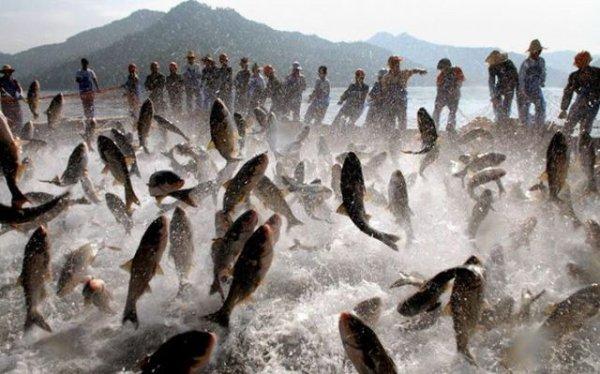 Лов рыбы в озере Киньдао, провинция Чжэцзян, Китай, 28 июня.