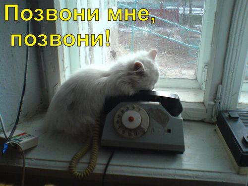 Позвони мне утром позвони мне днём