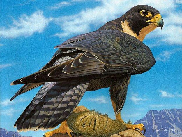 Фотография расположено в архивах: виды птиц в подмосковье