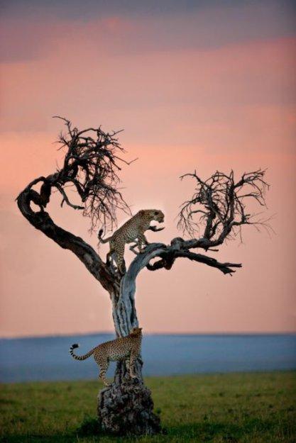 Шикарные снимки животных