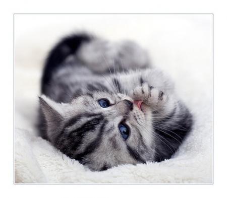 Котята кошки коты котяры