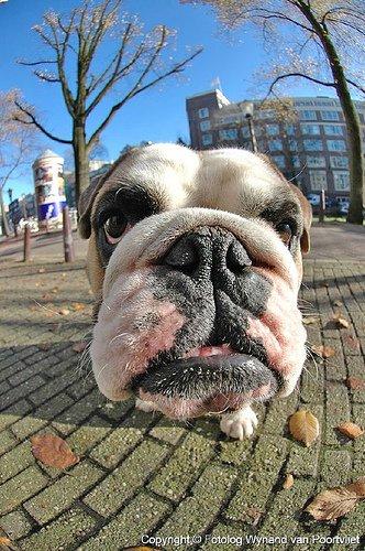 Маленькие или большие.  Собаки всегда прикольные.