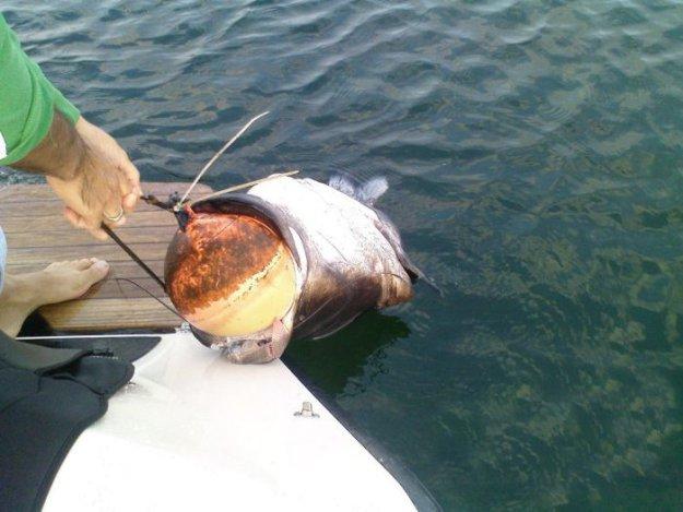 ловля рыбы по буйками