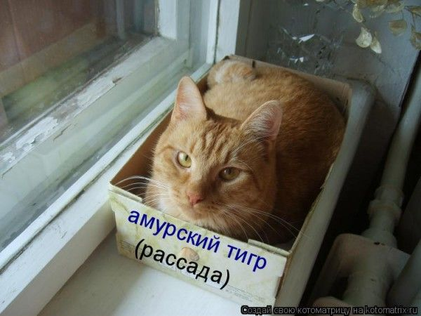 http://bm.img.com.ua/img/prikol/images/large/8/9/165098_311503.jpg