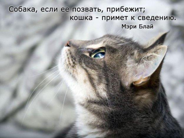 онлайн приколы про котов: