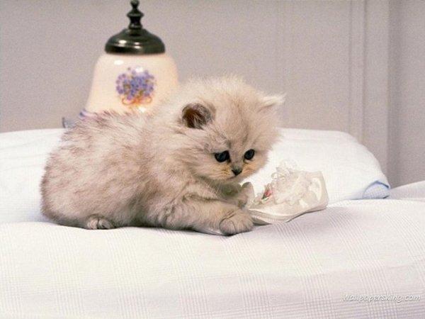 — фотогалрея прикольные фото котов