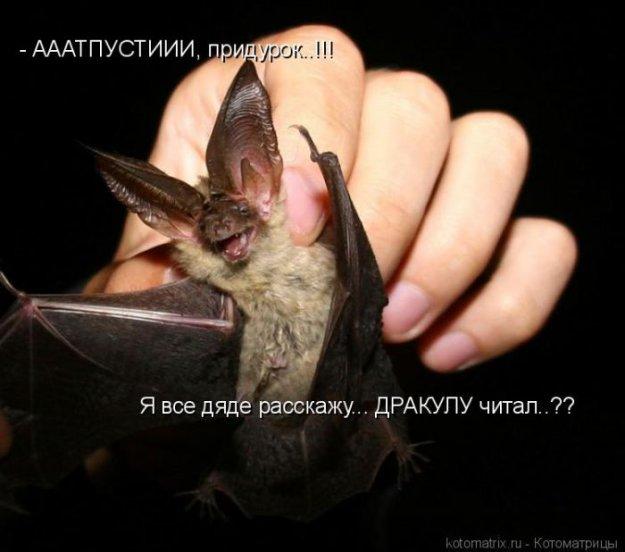 http://bm.img.com.ua/img/prikol/images/large/9/4/160449.jpg