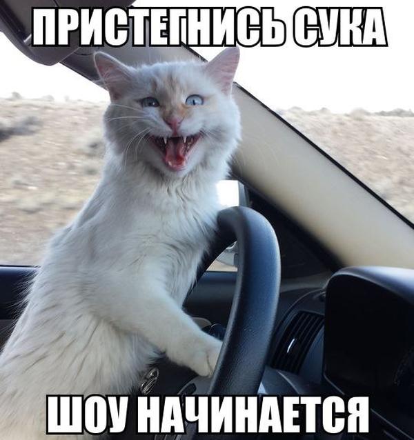 http://bm.img.com.ua/img/prikol/images/large/9/4/283749.jpg