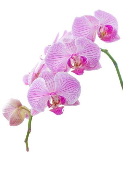 Прекрасные  цветы - Орхидеи