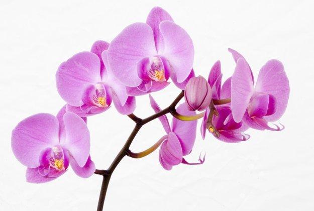 Orchid on a white background Орхидеи на белом фоне 10 JPEG 2016x3013...