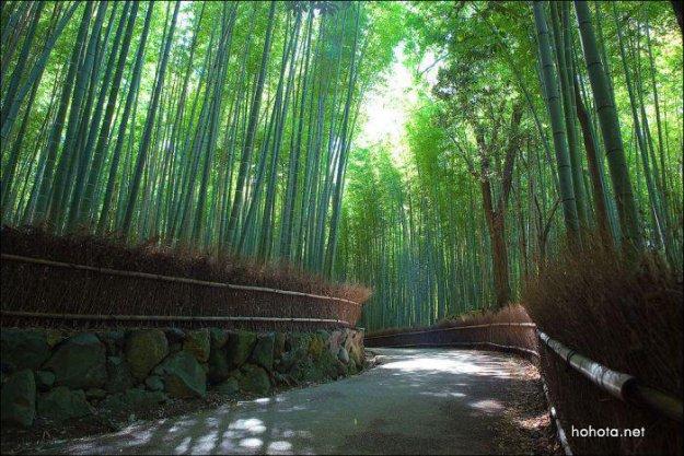 Бамбуковый лес