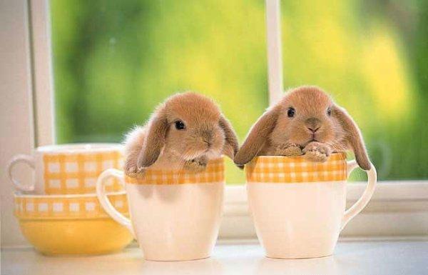 кролики - это не только ...