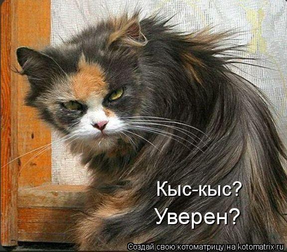 игры кот том 10