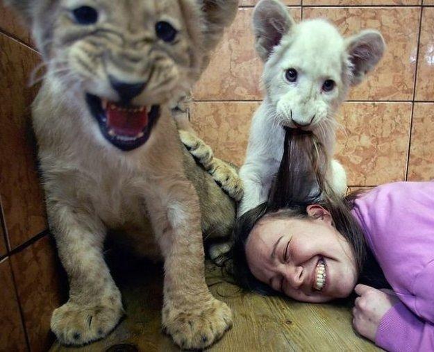 приколы животных и людей