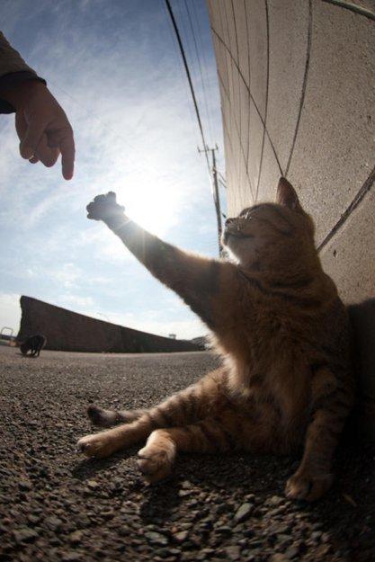 На японском острове кошачий рай