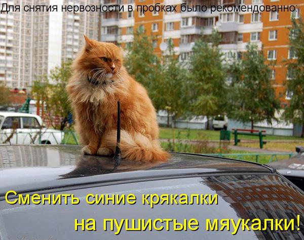 http://bm.img.com.ua/nxs/img/prikol/images/large/0/9/155590_278183.jpg