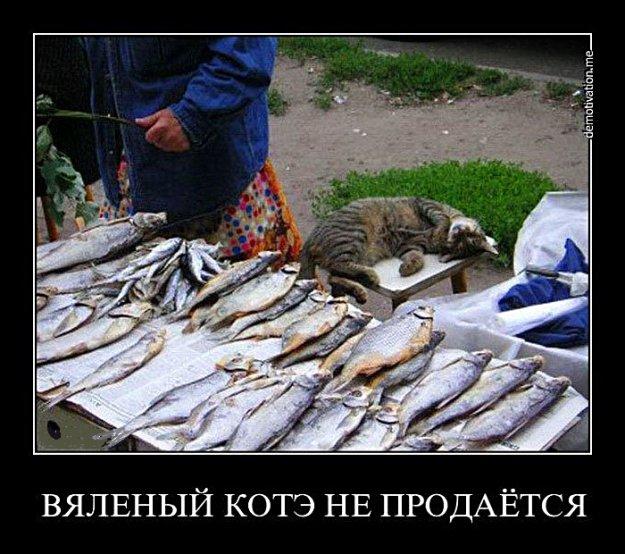про жизнь как о рыбалке