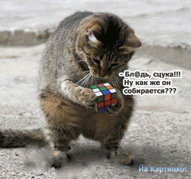 очень смешные картинки с животными: