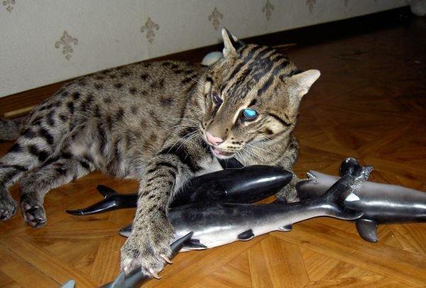 изложение кот рыболов